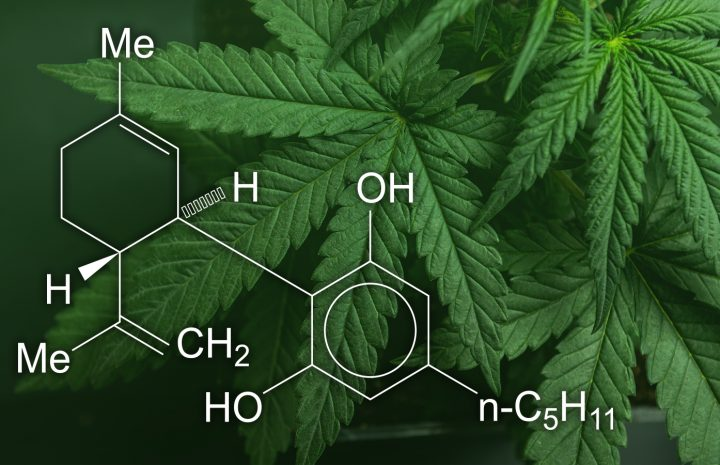 Read This to Know Whether CBD Oil Can Help Autoimmune Disorders?